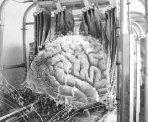 Hjernevask-300x247
